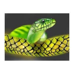 Flacon prédosé Douceur de Jade